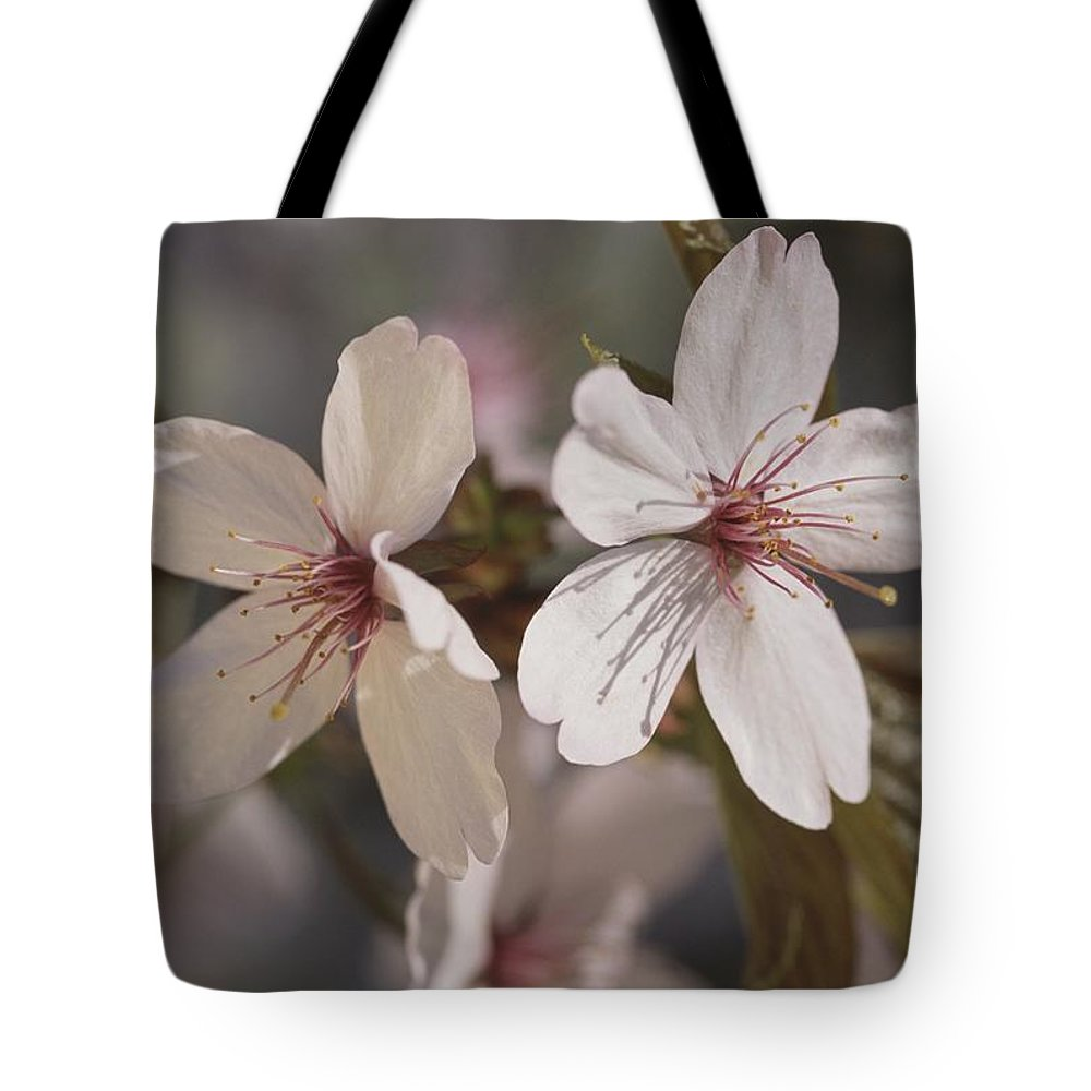 Scenes And Views Tote Bag featuring the photograph Close View Of Cherry Blossoms by Darlyne A. Murawski