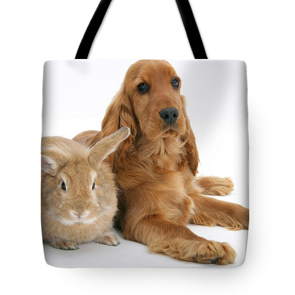 Animal Tote Bag featuring the photograph Cocker Spaniel And Rabbit by Mark Taylor