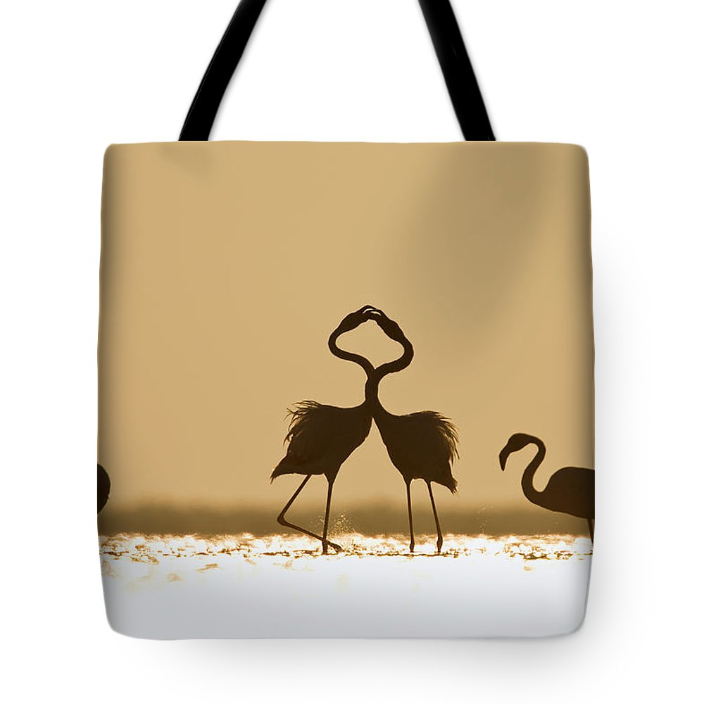 Mp Tote Bag featuring the photograph Greater Flamingo Phoenicopterus Ruber by Konrad Wothe
