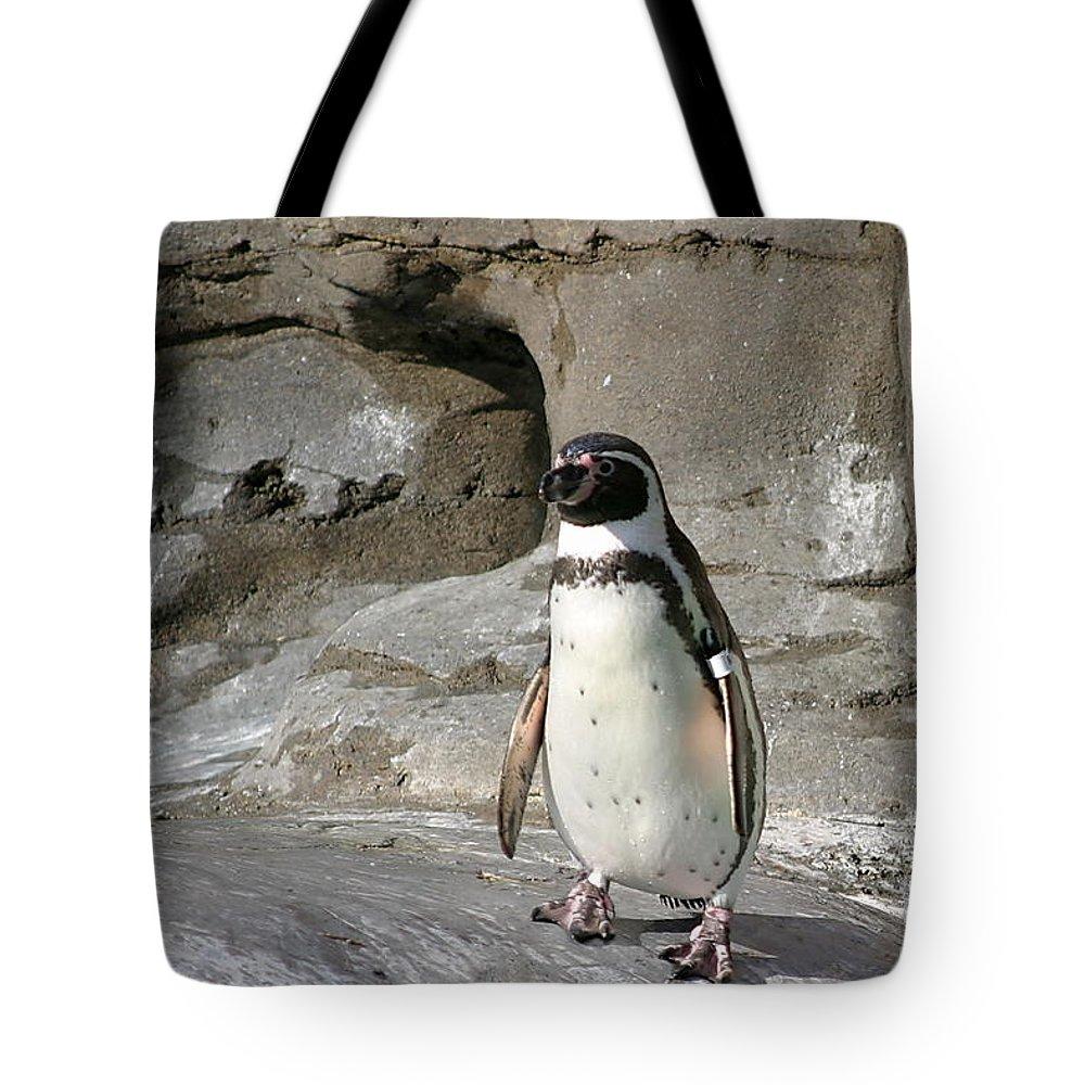 White Tote Bag featuring the photograph Humboldt Penguin by Henrik Lehnerer