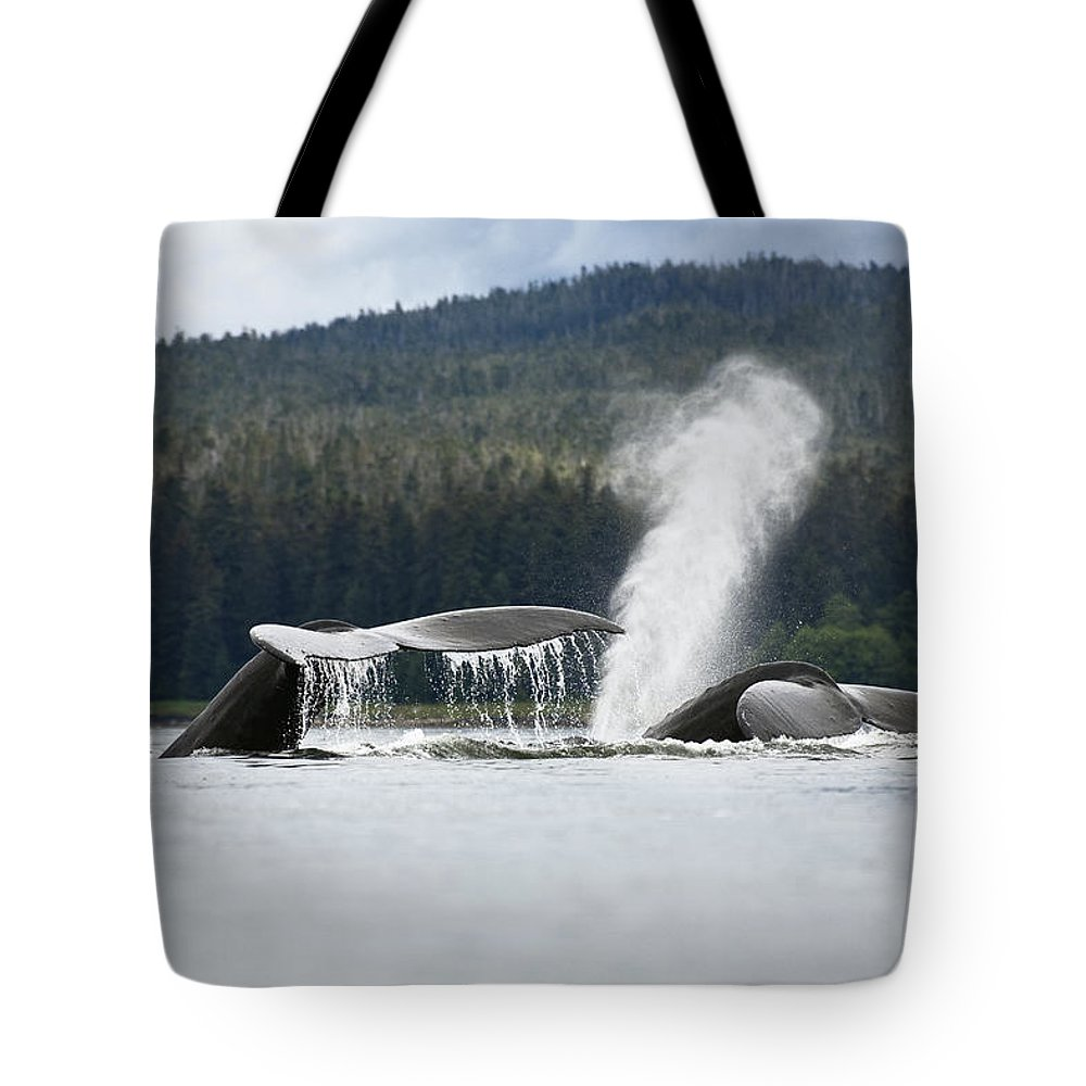 Mp Tote Bag featuring the photograph Humpback Whale Megaptera Novaeangliae by Konrad Wothe
