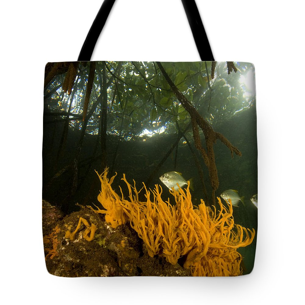Underwater Tote Bag featuring the photograph Orange Sponges Grow by Tim Laman
