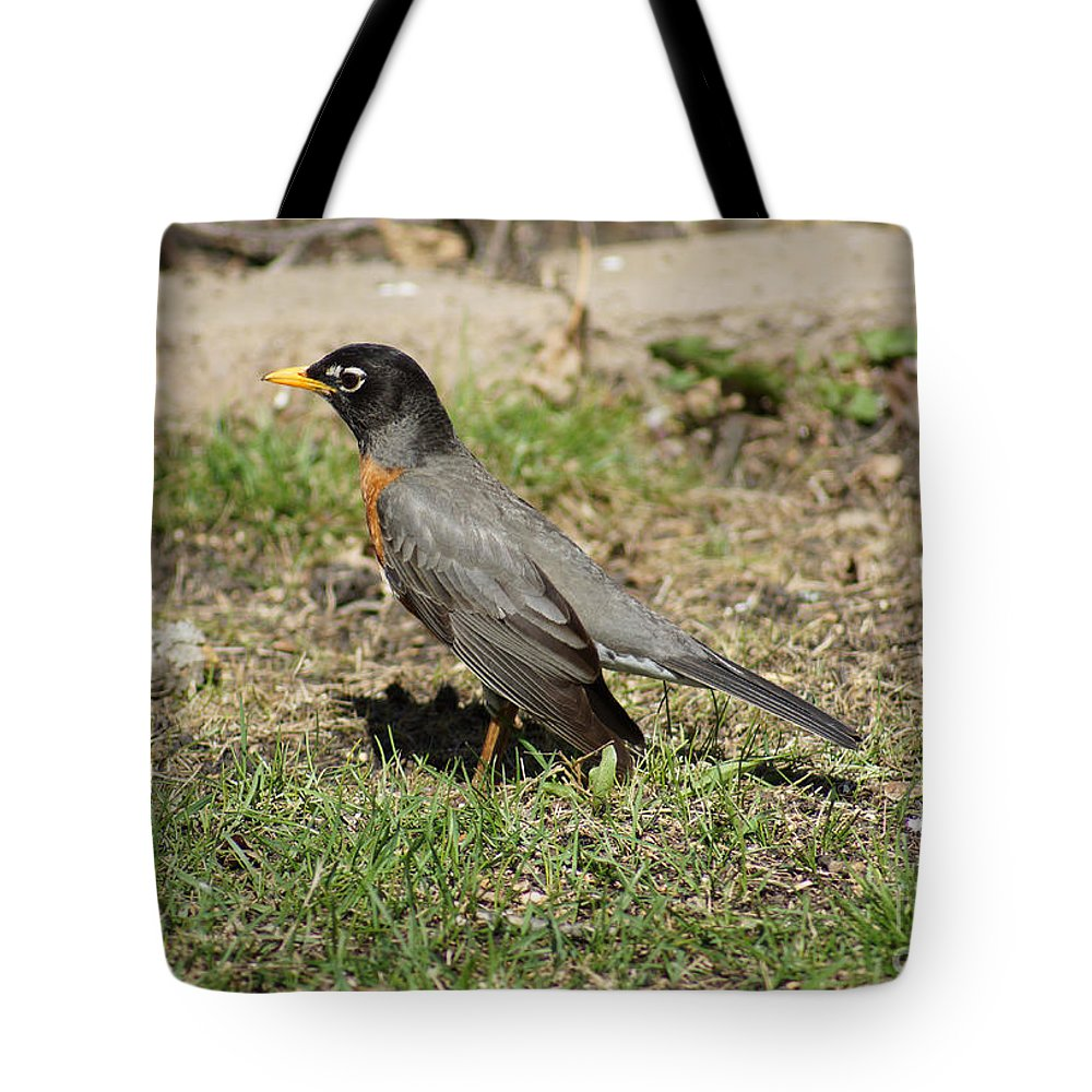 Birds Tote Bag featuring the photograph Robin by Lori Tordsen