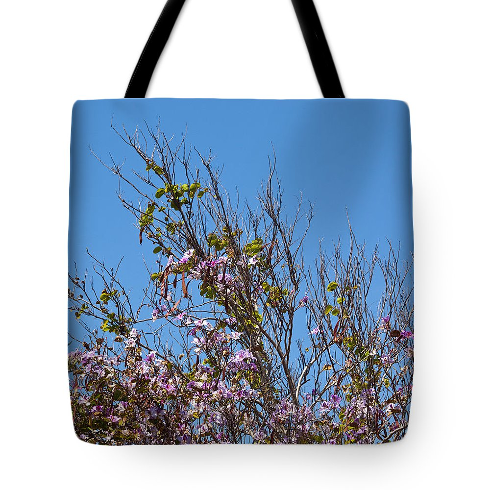 Saucer Tote Bag featuring the photograph Saucer Magnolia Or Tulip Tree Magnolia X Soulangeana by Allan Hughes