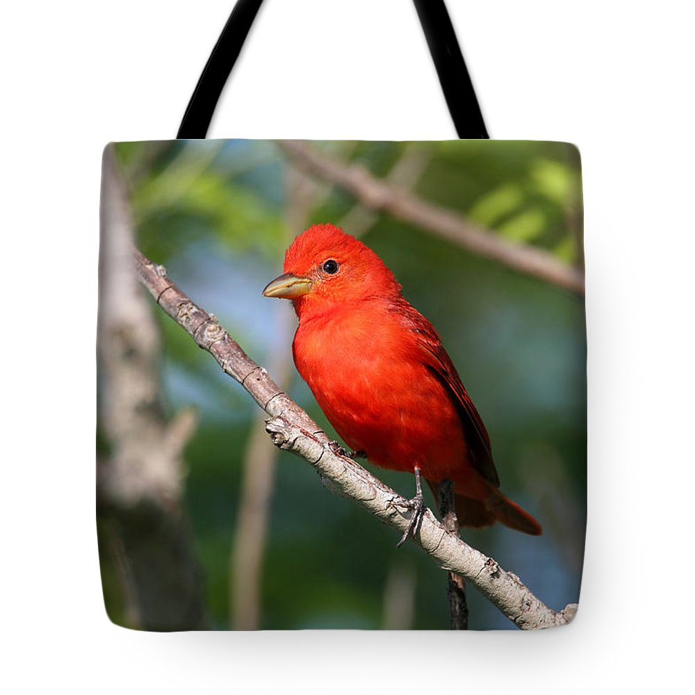 Doug Lloyd Tote Bag featuring the photograph Summer Tanager by Doug Lloyd