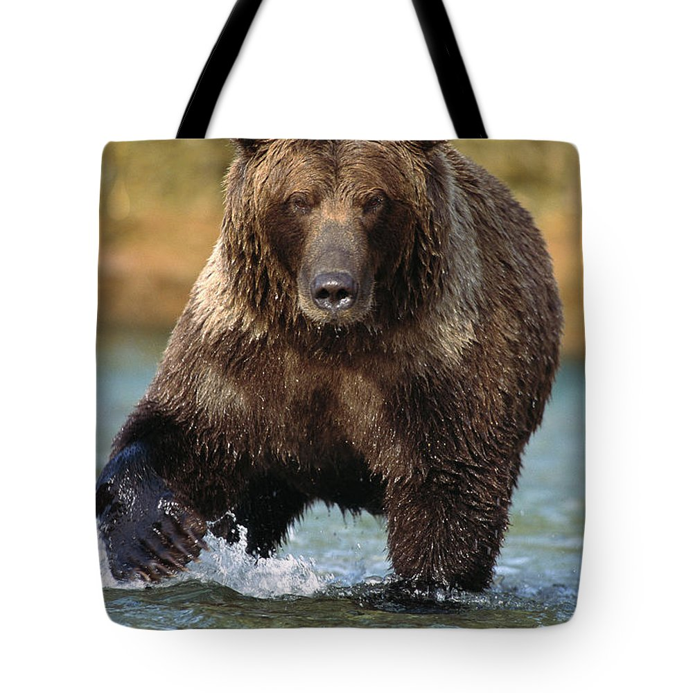 Alaska Tote Bag featuring the photograph Grizzly Bear Ursus Arctos Horribilis by Matthias Breiter