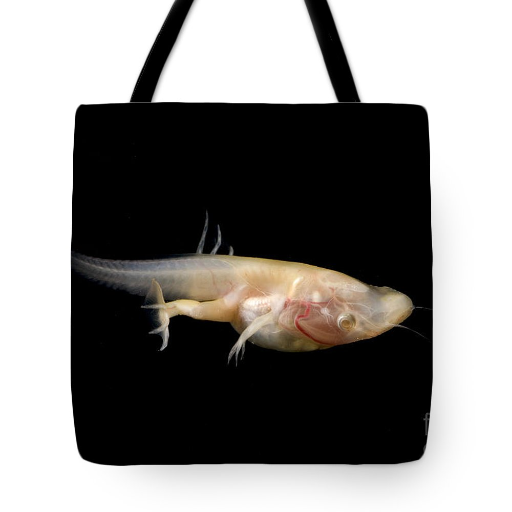 African Clawed Frog Tote Bag featuring the photograph African Clawed Frog Tadpole by Dante Fenolio