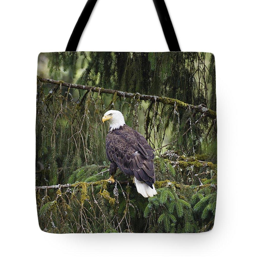 Mp Tote Bag featuring the photograph Bald Eagle Haliaeetus Leucocephalus by Konrad Wothe