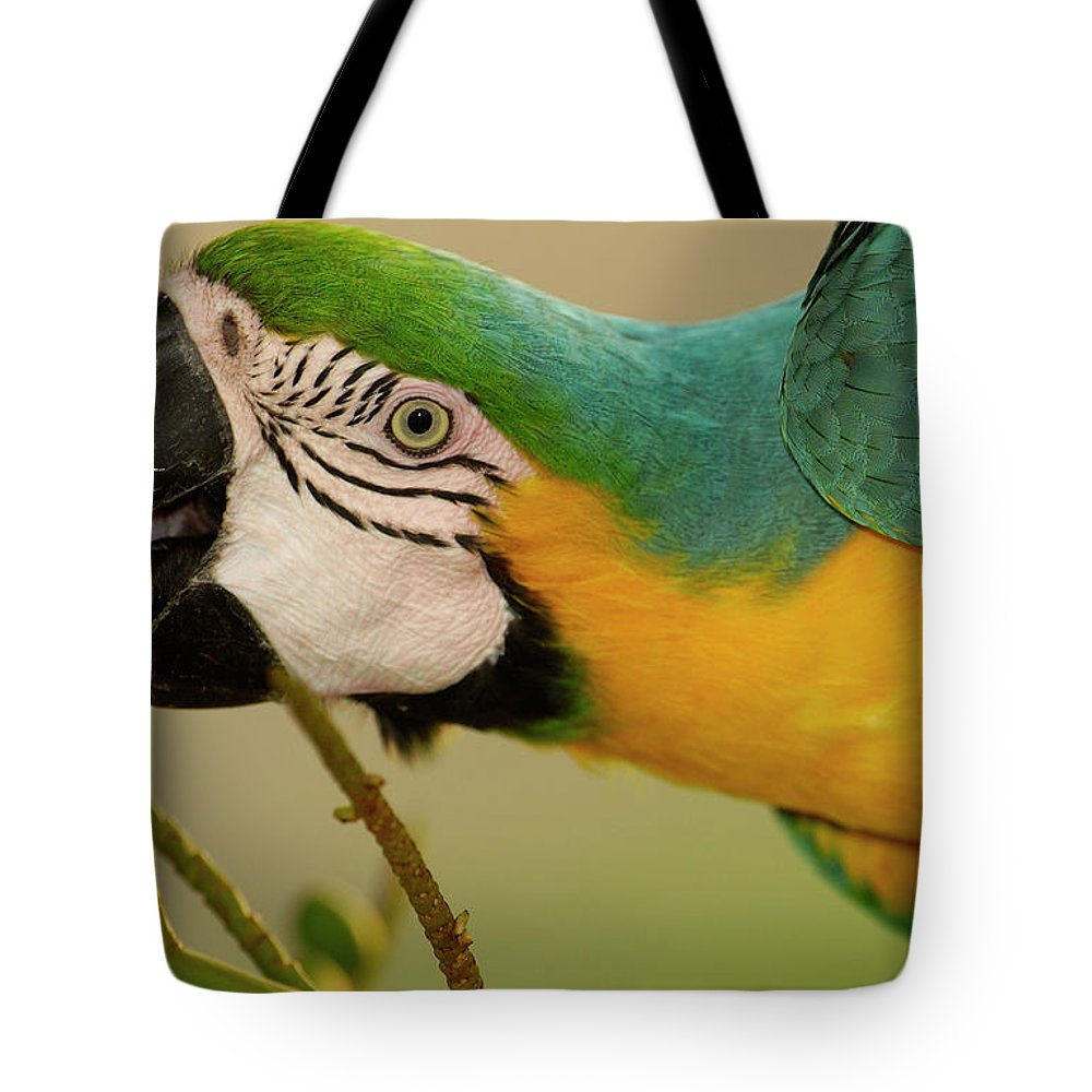 Amazon Tote Bag featuring the photograph Blue And Yellow Macaw Ara Ararauna by Pete Oxford