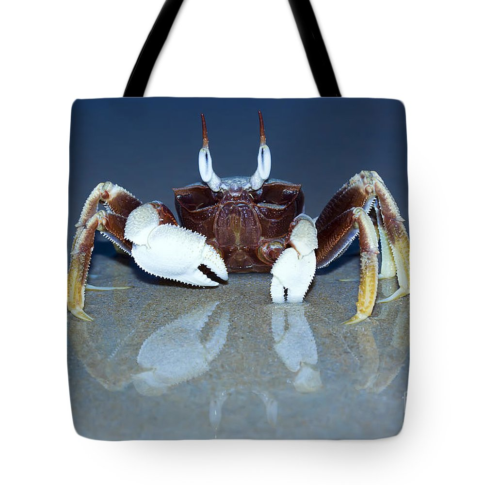 Animal Tote Bag featuring the photograph Crab On The Tropical Beach by MotHaiBaPhoto Prints