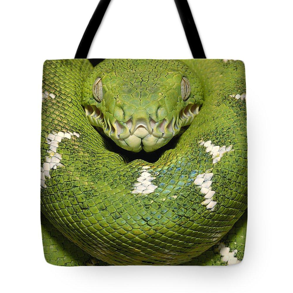 Emerald Tree Boa Corallus Caninus Tote Bag for Sale by Pete Oxford