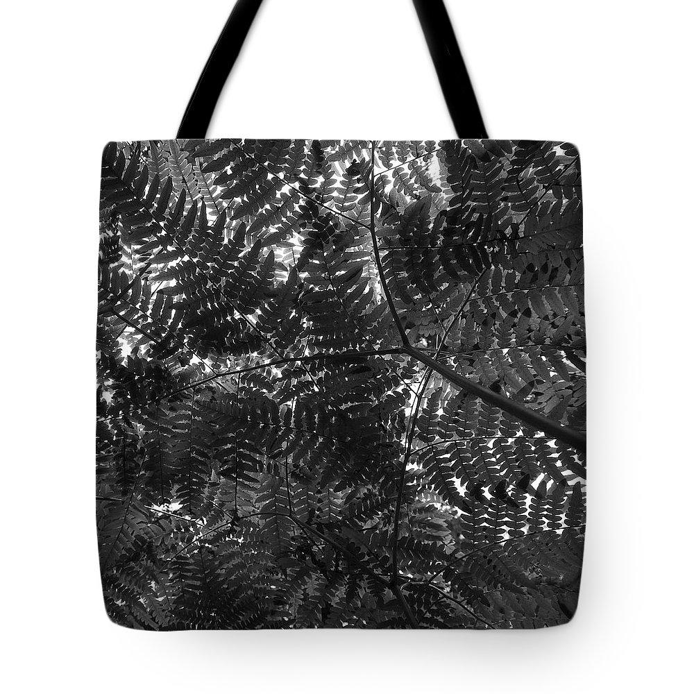 Lehtokukka Tote Bag featuring the photograph Ferns by Jouko Lehto