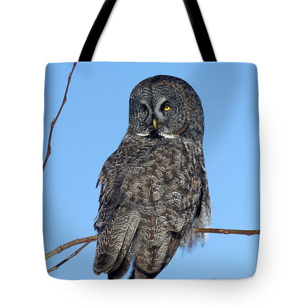 Doug Lloyd Tote Bag featuring the photograph Great Gray Owl by Doug Lloyd
