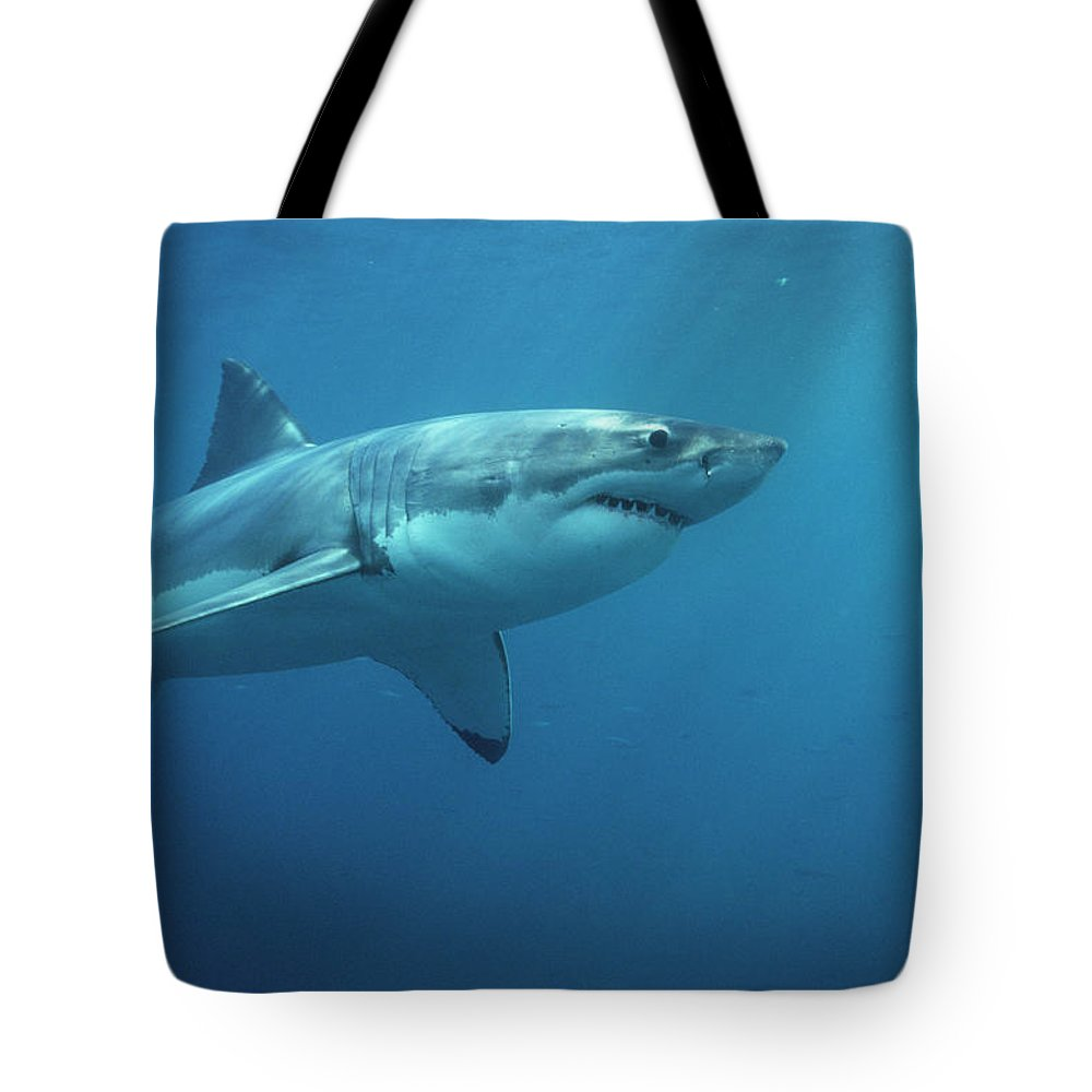Mp Tote Bag featuring the photograph Great White Shark Carcharodon by Mike Parry