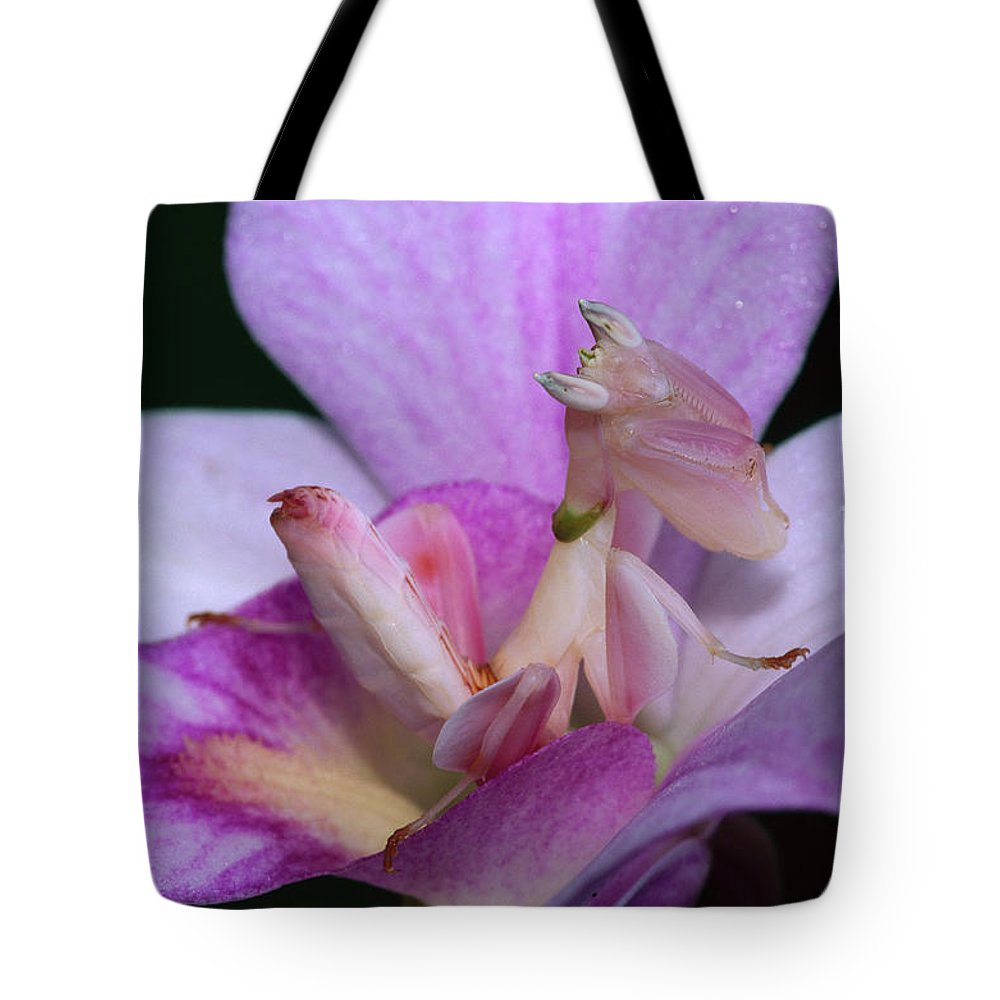 Mp Tote Bag featuring the photograph Orchid Mantis Hymenopus Coronatus by Thomas Marent