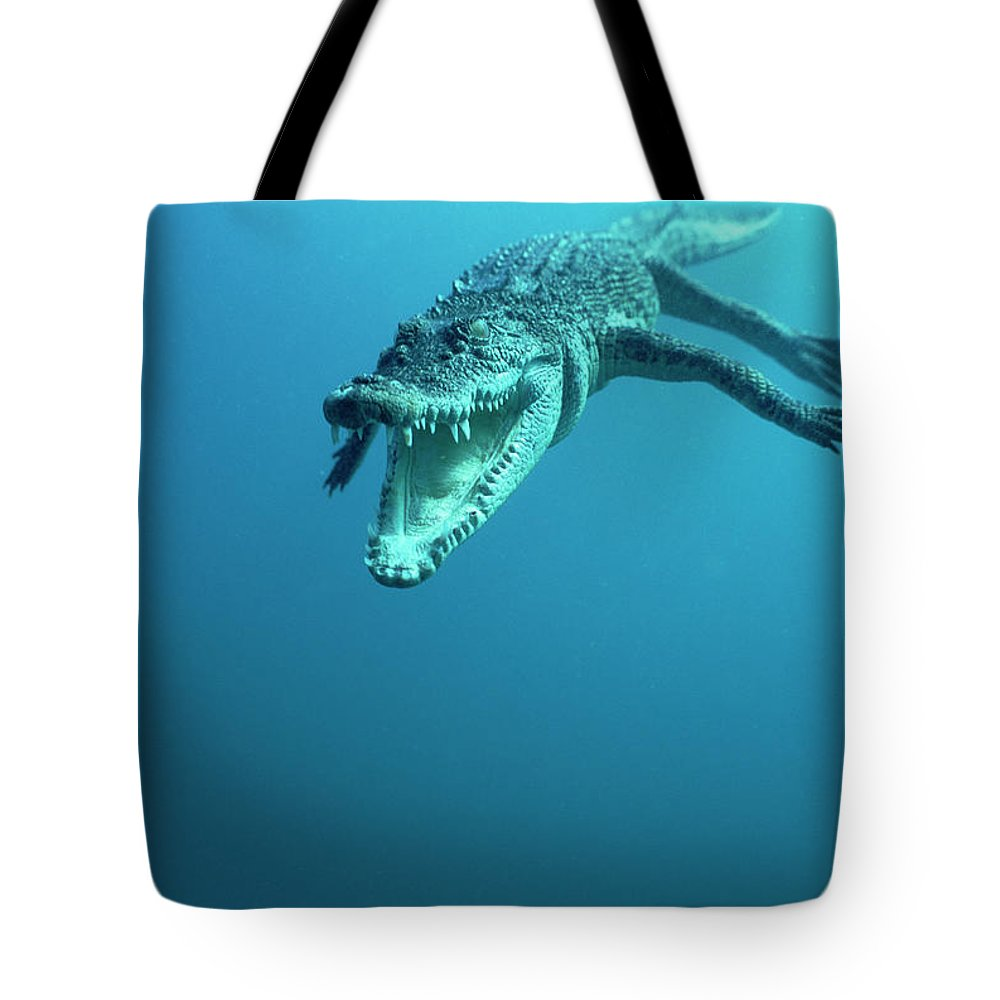 Mp Tote Bag featuring the photograph Saltwater Crocodile Crocodylus Porosus by Mike Parry