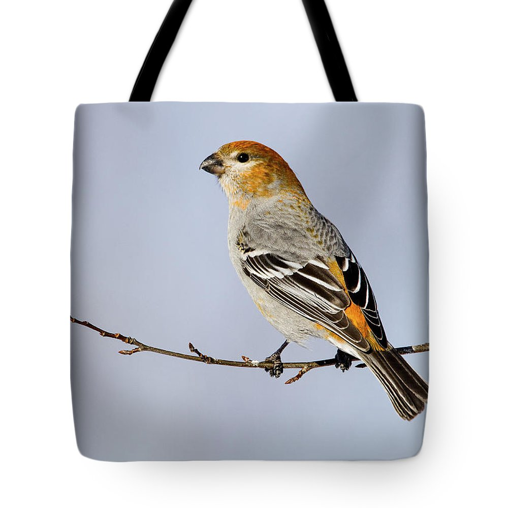 Doug Lloyd Tote Bag featuring the photograph Female Pine Grosbeak by Doug Lloyd
