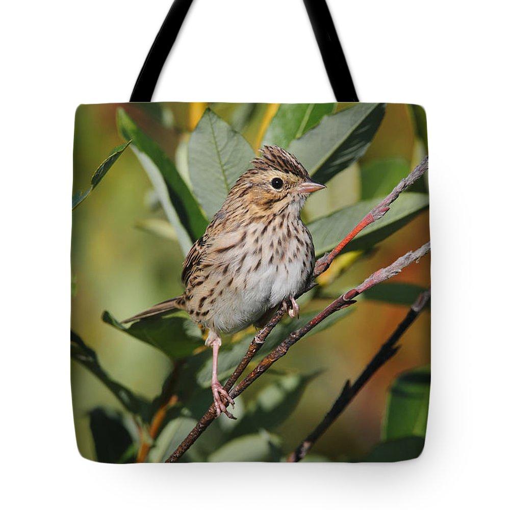 Doug Lloyd Tote Bag featuring the photograph Savannah Sparrow by Doug Lloyd