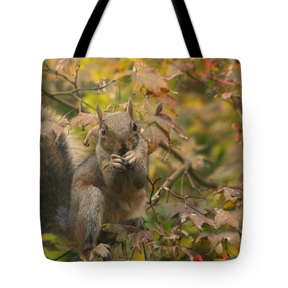 Nature Tote Bag featuring the photograph Squirrel Dinner by Valia Bradshaw