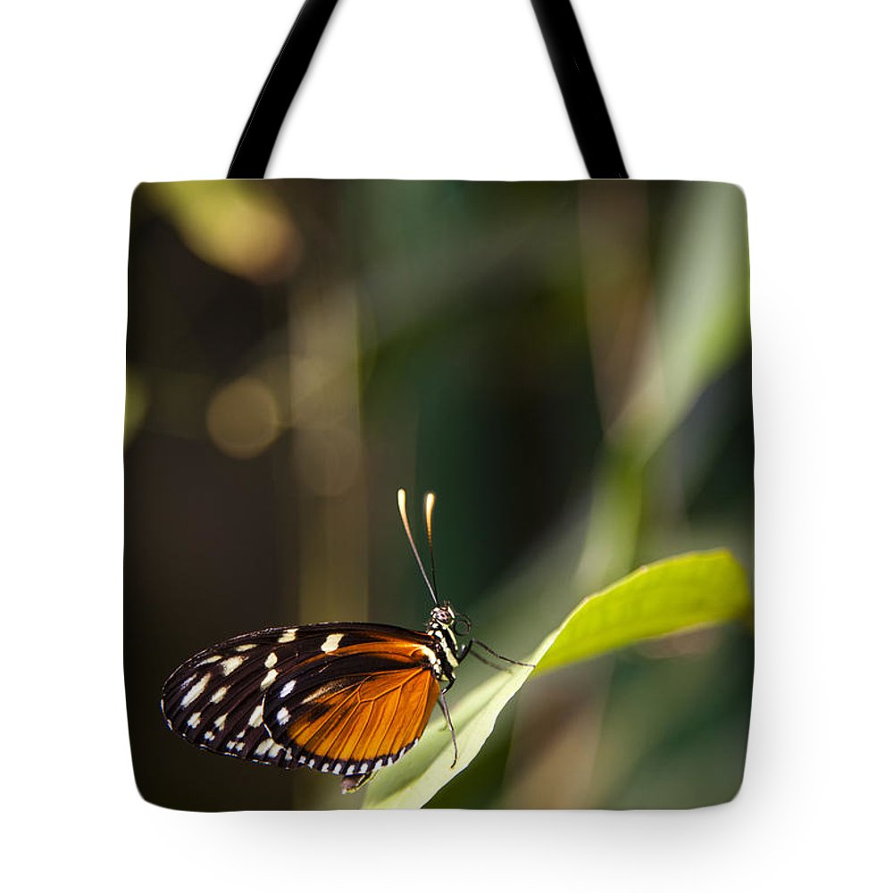 Golden Helicon Tote Bag featuring the photograph A Butterfly Rests On A Leaf by Taylor S. Kennedy