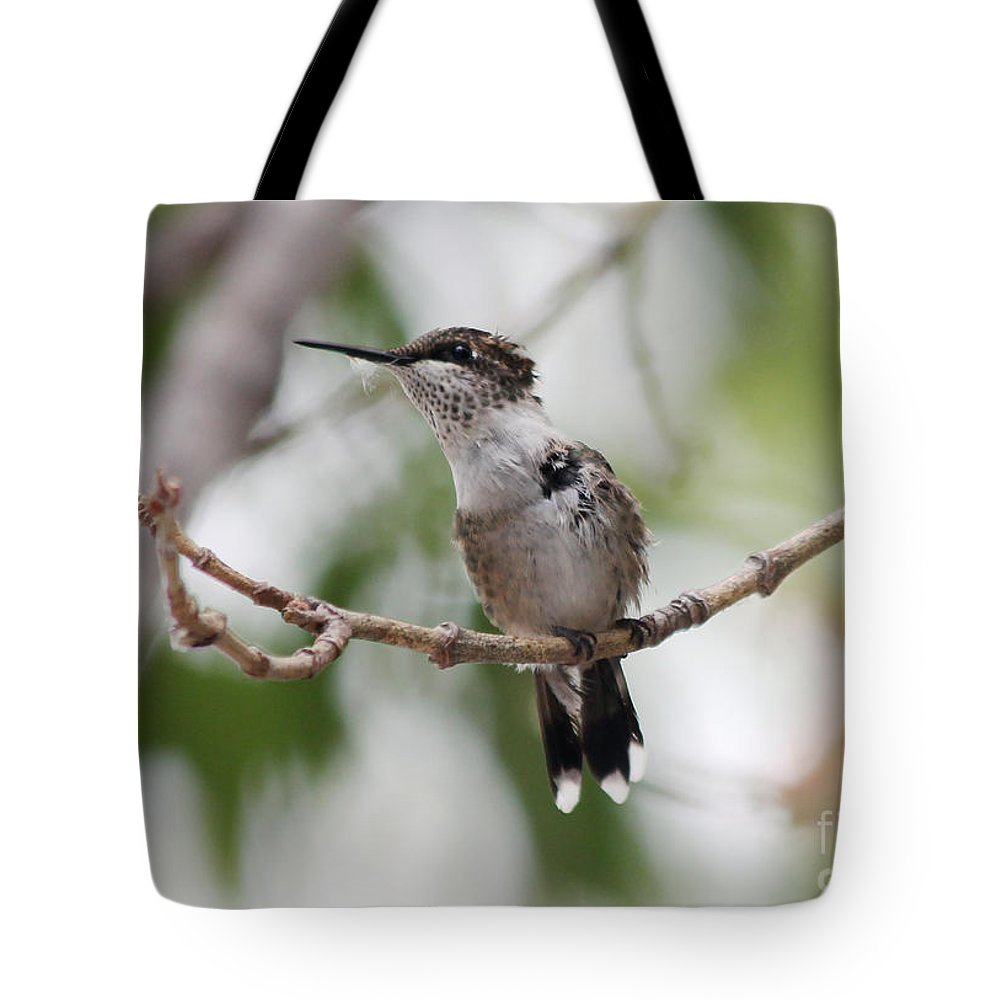 Hummingbirds Tote Bag featuring the photograph The Scrapper by Lori Tordsen