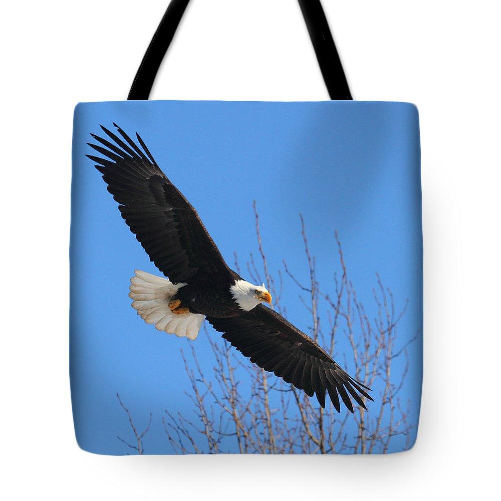 Doug Lloyd Tote Bag featuring the photograph American Bald Eagle by Doug Lloyd