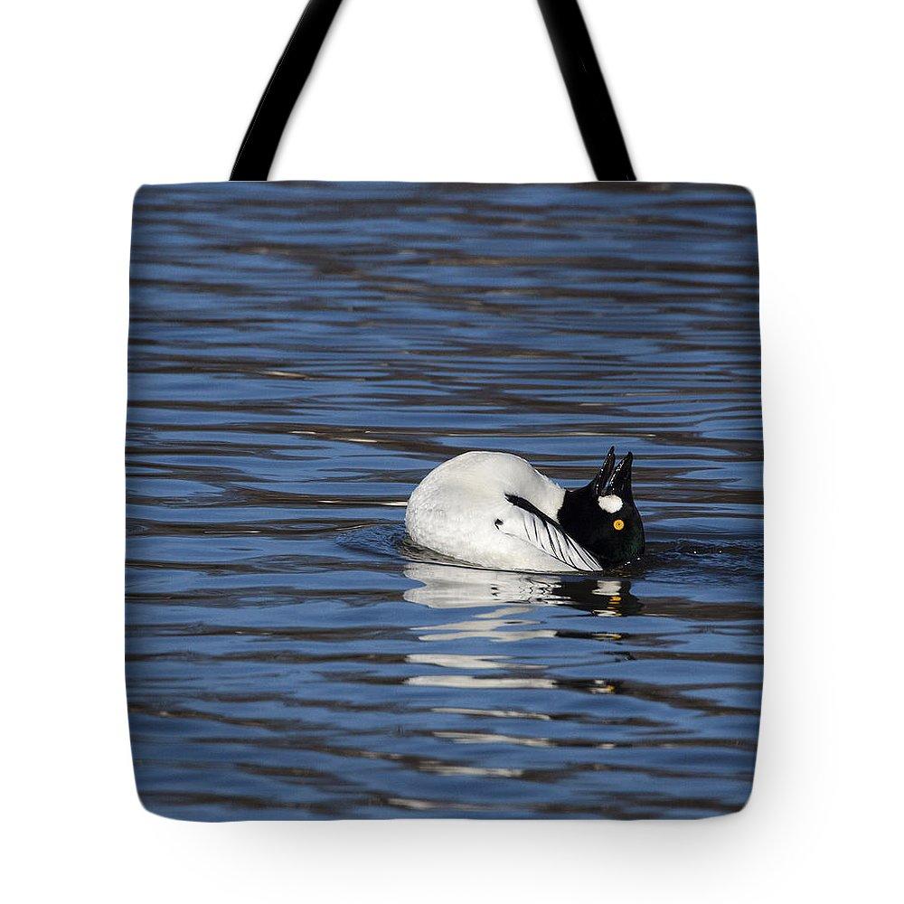 Doug Lloyd Tote Bag featuring the photograph Common Goldeneye by Doug Lloyd
