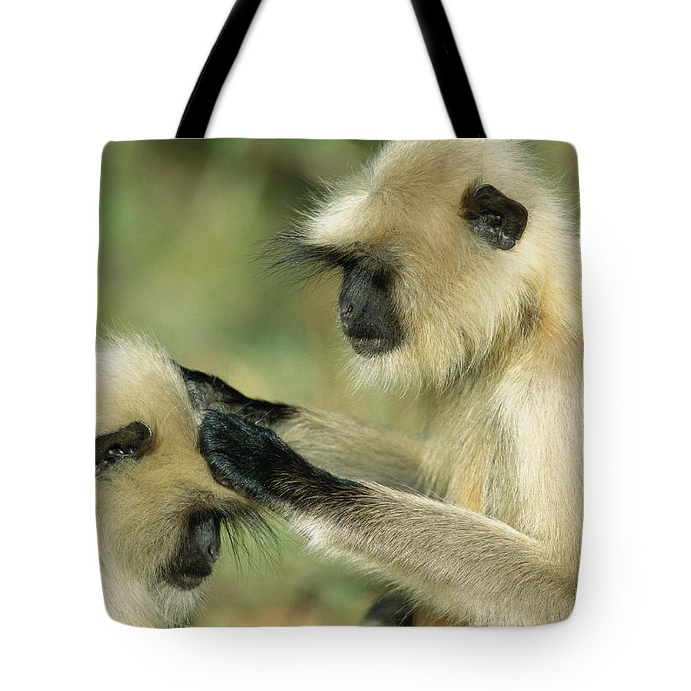 Mp Tote Bag featuring the photograph Hanuman Langur Semnopithecus Entellus by Cyril Ruoso