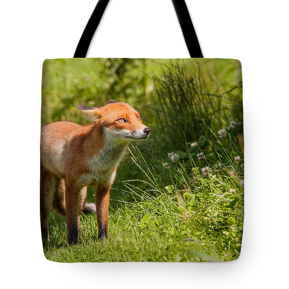 British Wildlife Centre Tote Bag featuring the photograph A British Red Fox by Dawn OConnor