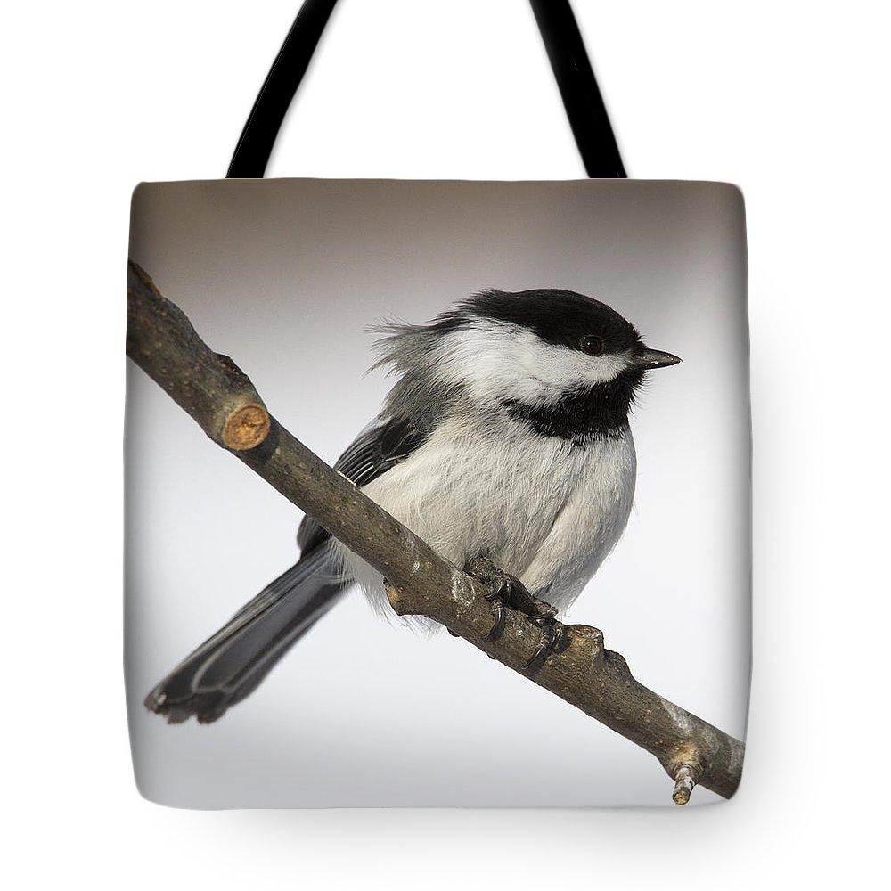 Doug Lloyd Tote Bag featuring the photograph Blackcapped Chickadee by Doug Lloyd