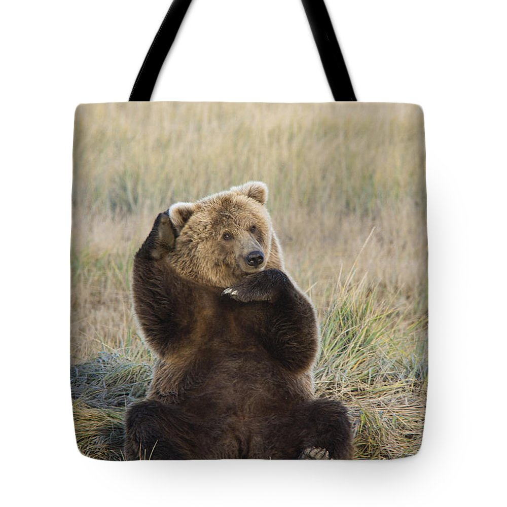 Mp Tote Bag featuring the photograph Grizzly Bear Ursus Arctos Horribilis by Matthias Breiter