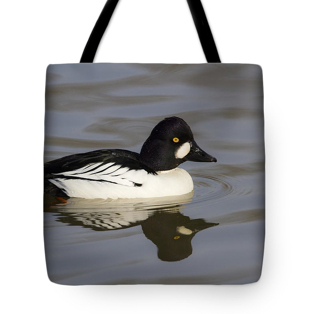 Doug Lloyd Tote Bag featuring the photograph Common Goldeneye by Doug Lloyd