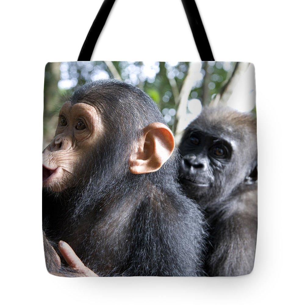 A Baby Gorilla And A Chimpanzee Hugging Tote Bag