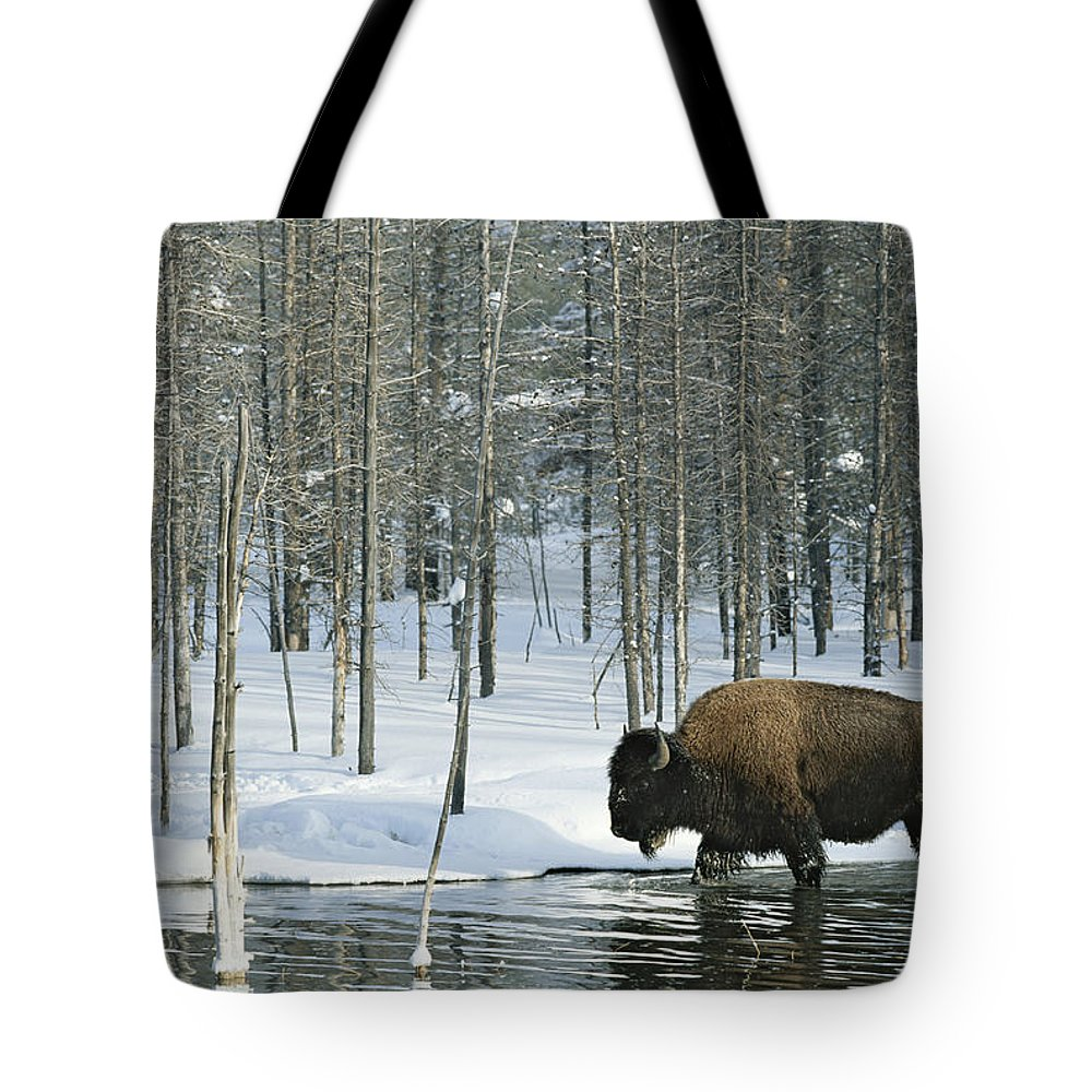 Animals Tote Bag featuring the photograph A Bison Stands In A Cold Stream by Norbert Rosing