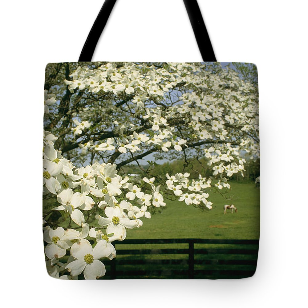 Plants Tote Bag featuring the photograph A Blossoming Dogwood Tree In Virginia by Annie Griffiths