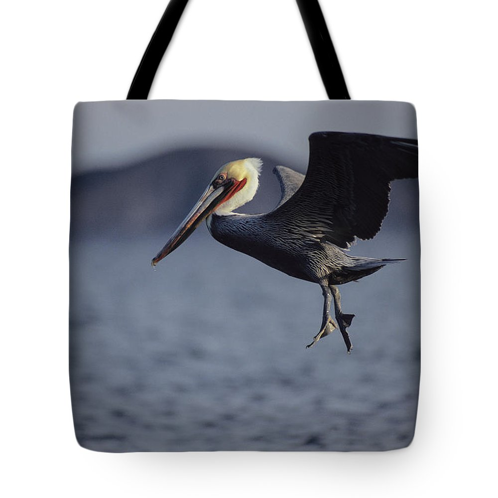 North America Tote Bag featuring the photograph A Brown Pelican Prepares To Land by Tim Laman