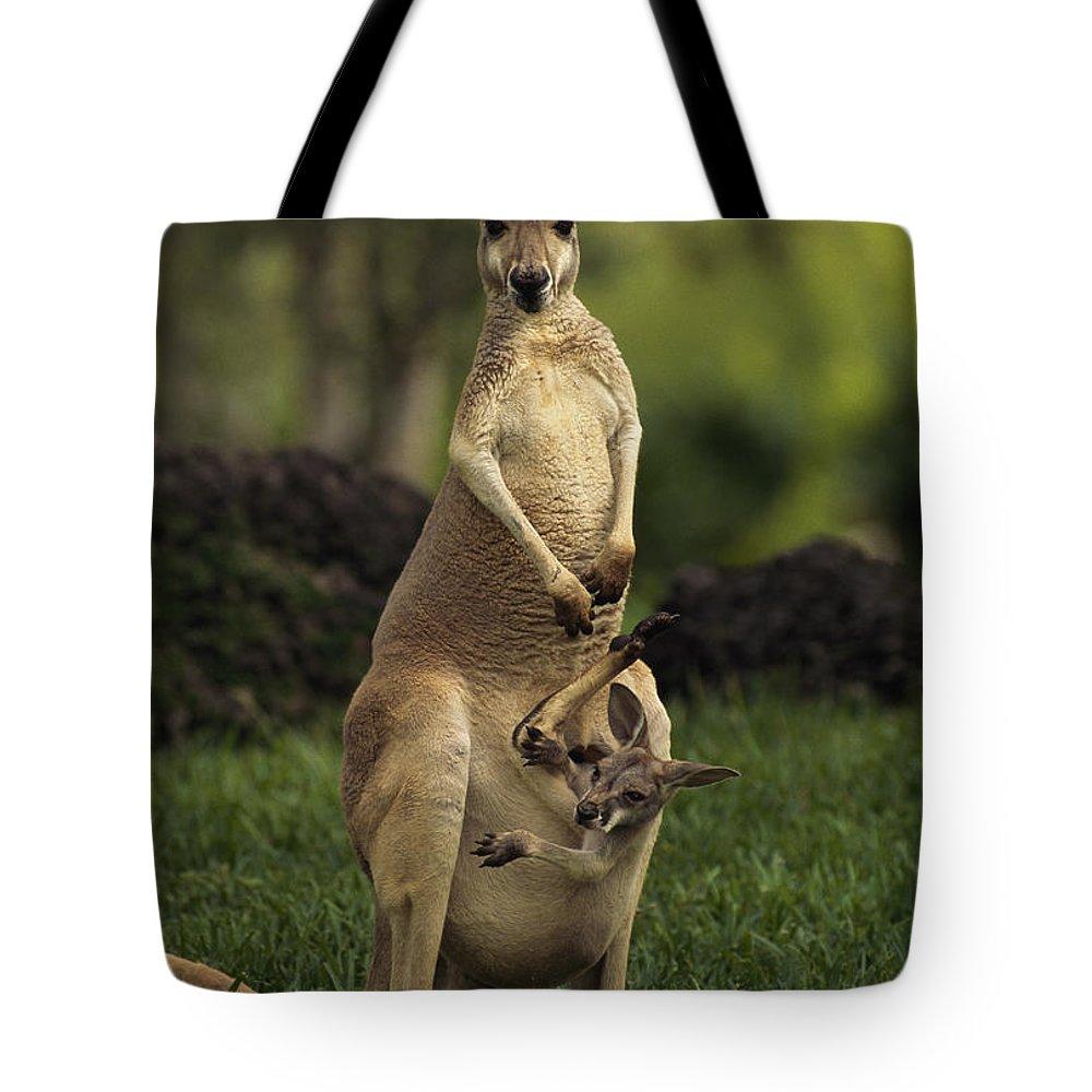 australia Tote Bag featuring the photograph A Captive Red Kangaroo Macropus Rufus by Tim Laman