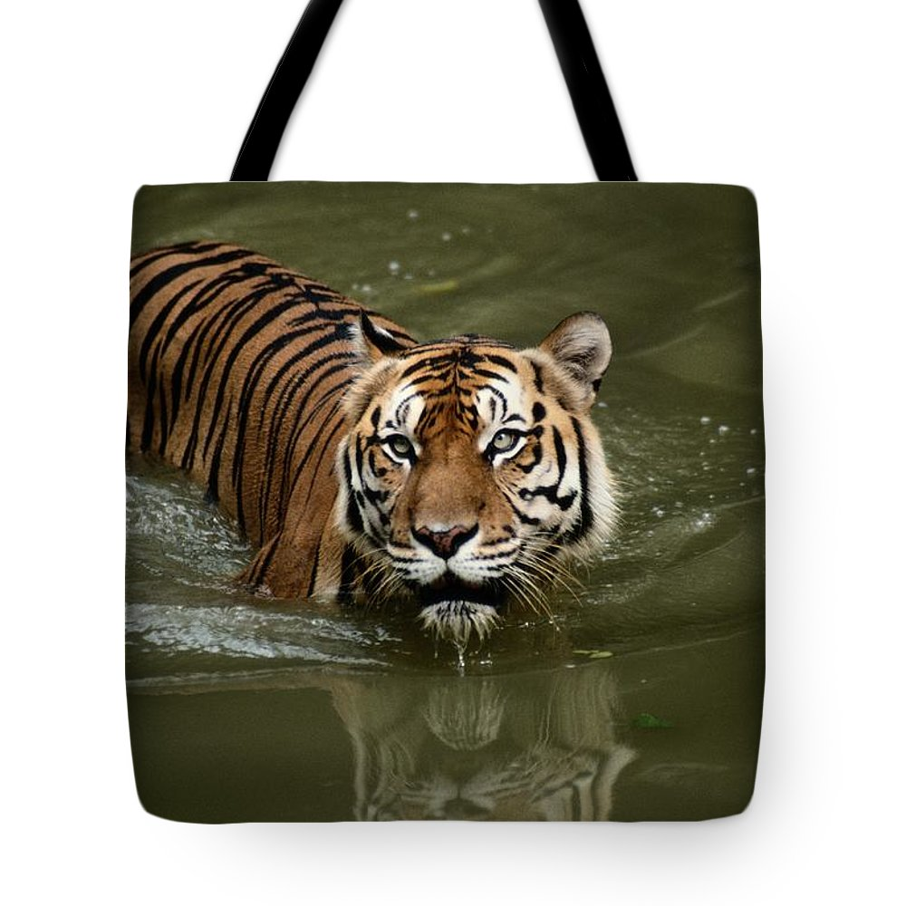 asia Tote Bag featuring the photograph A Captive Sumatran Tiger Panthera by Tim Laman