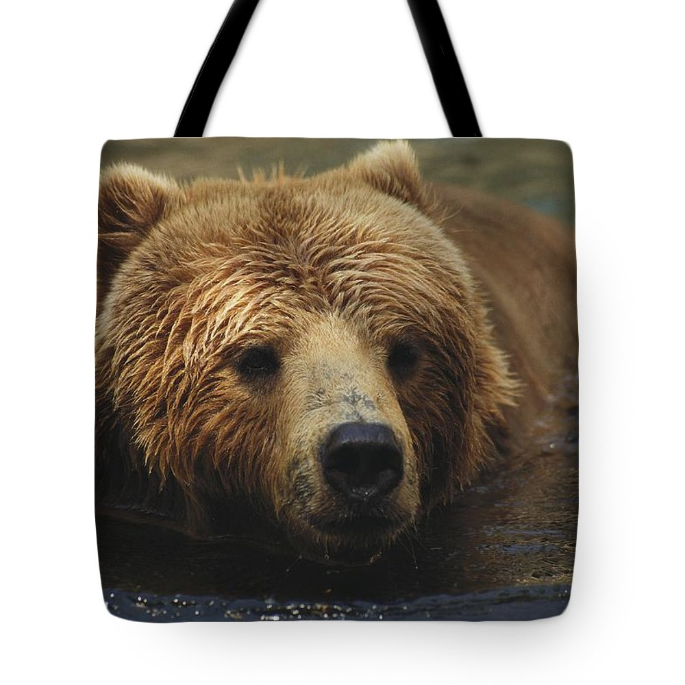 North America Tote Bag featuring the photograph A Close View Of A Captive Kodiak Bear by Tim Laman