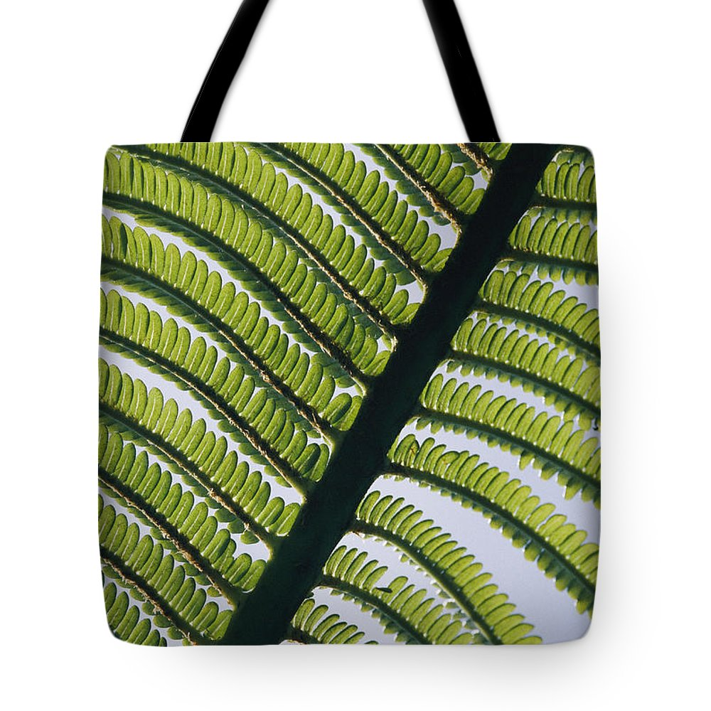 Kauai Island Tote Bag featuring the photograph A Close View Of A Fern by George F. Mobley