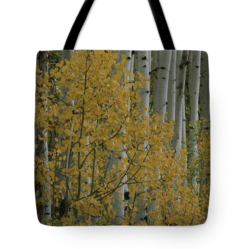 Kebler Pass Tote Bag featuring the photograph A Close View Of Quaking Aspen Trees by Marc Moritsch