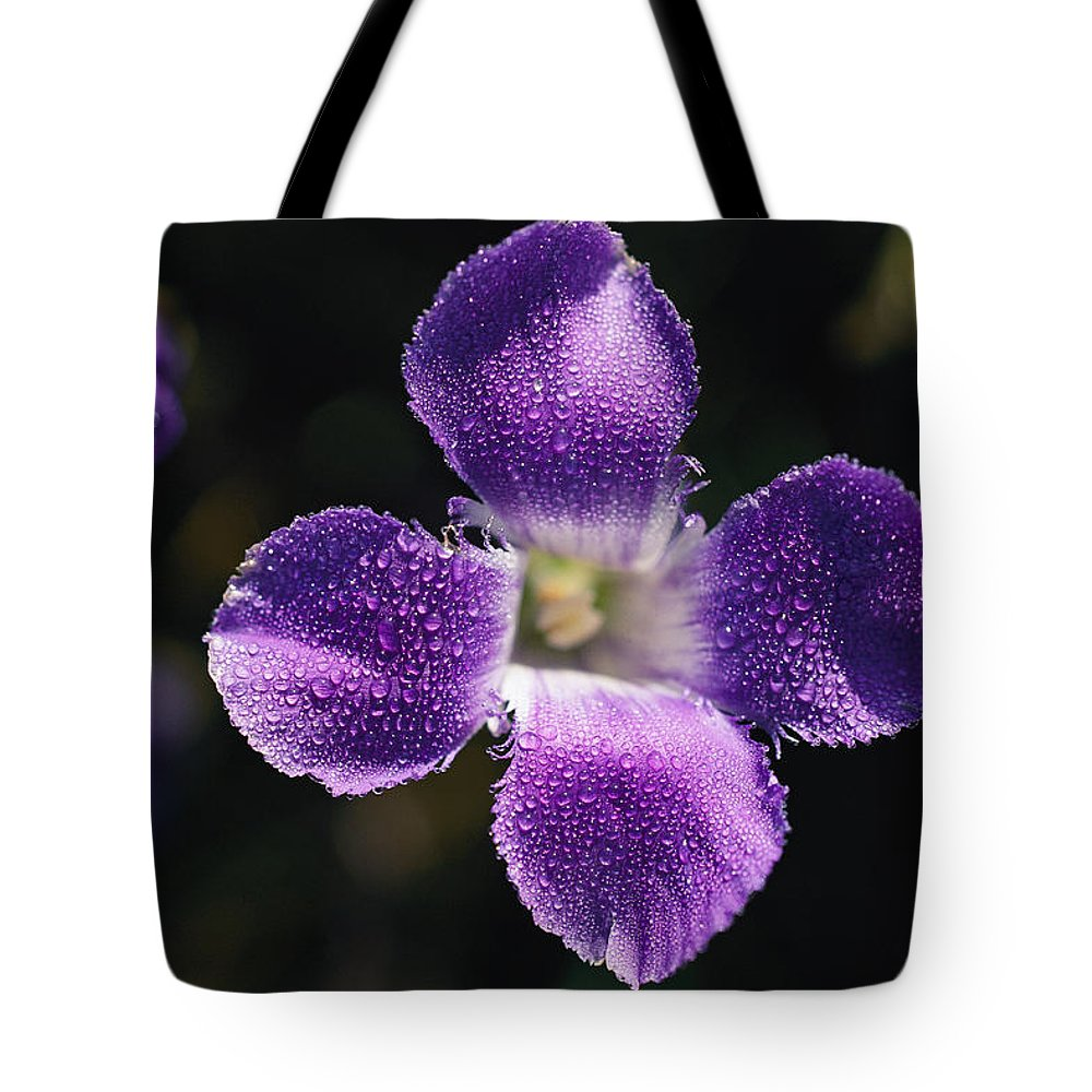 Yellowstone National Park Tote Bag featuring the photograph A Close View Of The Rocky Mountain Blue by Norbert Rosing
