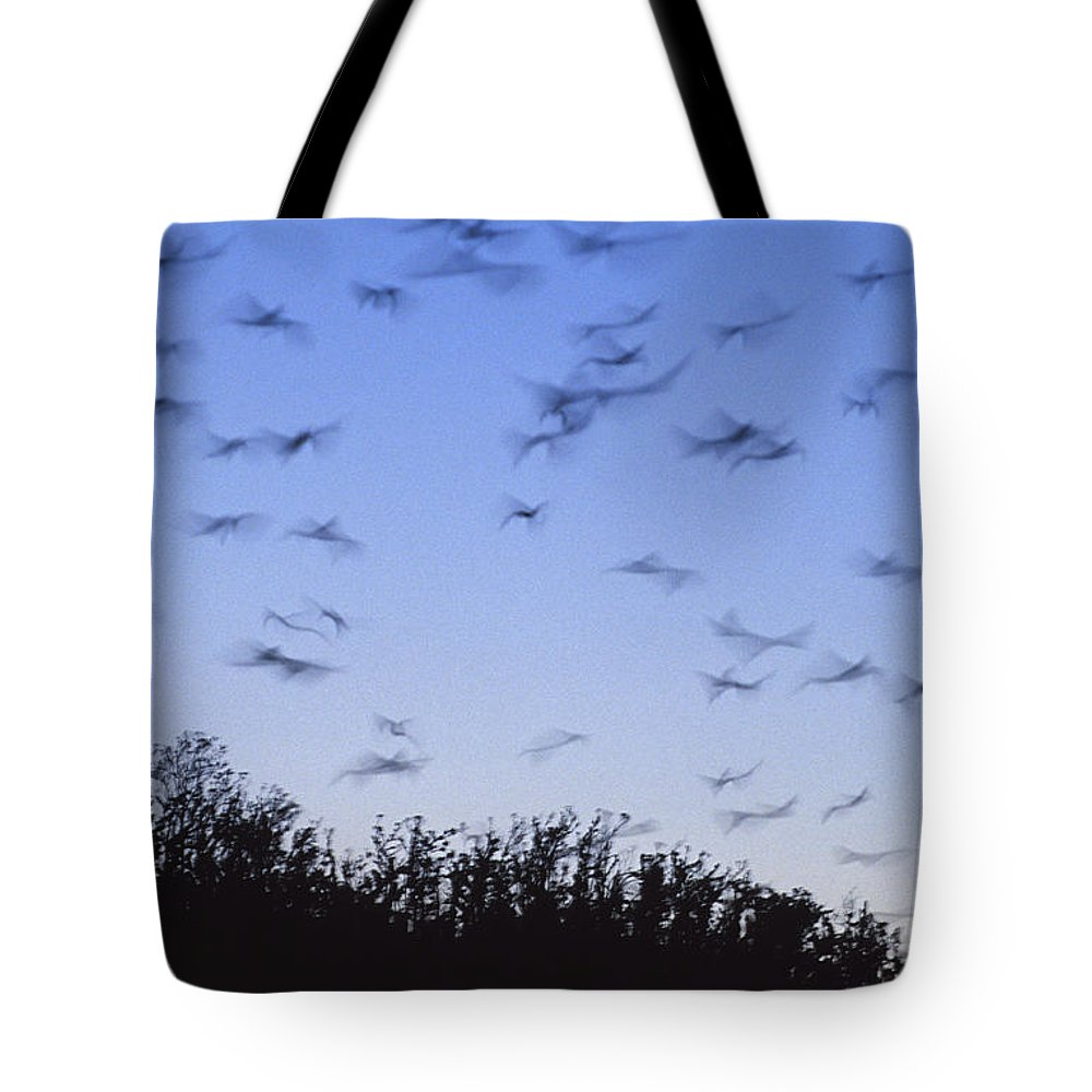 Vulnerable Tote Bag featuring the photograph A Colony Of Vulnerable Spectacled by Jason Edwards