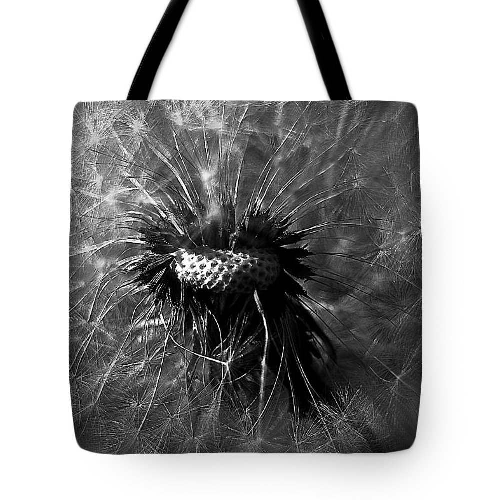 Taraxacum Officinale Tote Bag featuring the photograph A Dandy Lion by Beth Phifer