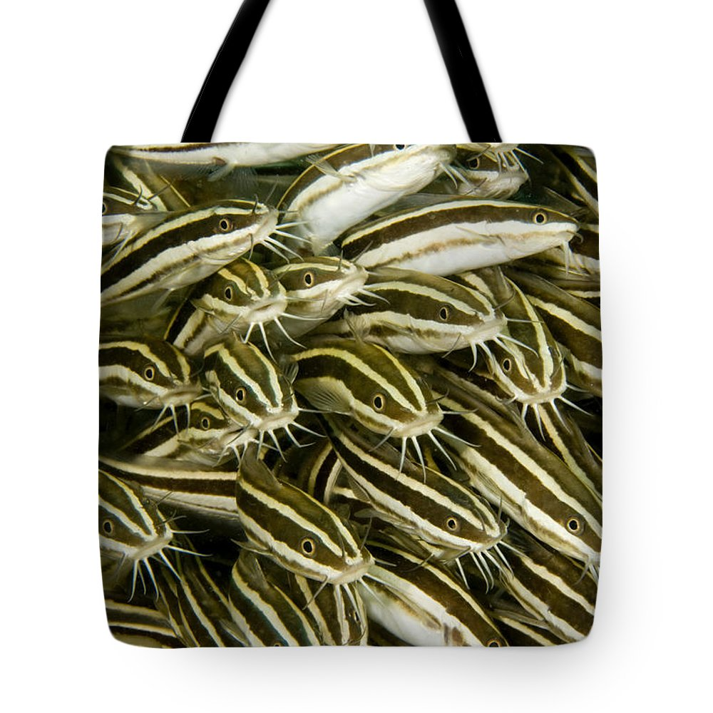Plotosus Lineatus Tote Bag featuring the photograph A Dense School Of Juvenile Striped by Tim Laman