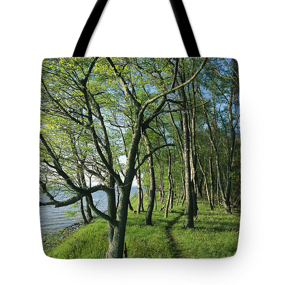North America Tote Bag featuring the photograph A Dirt Path Winds Through A Waterside by Skip Brown