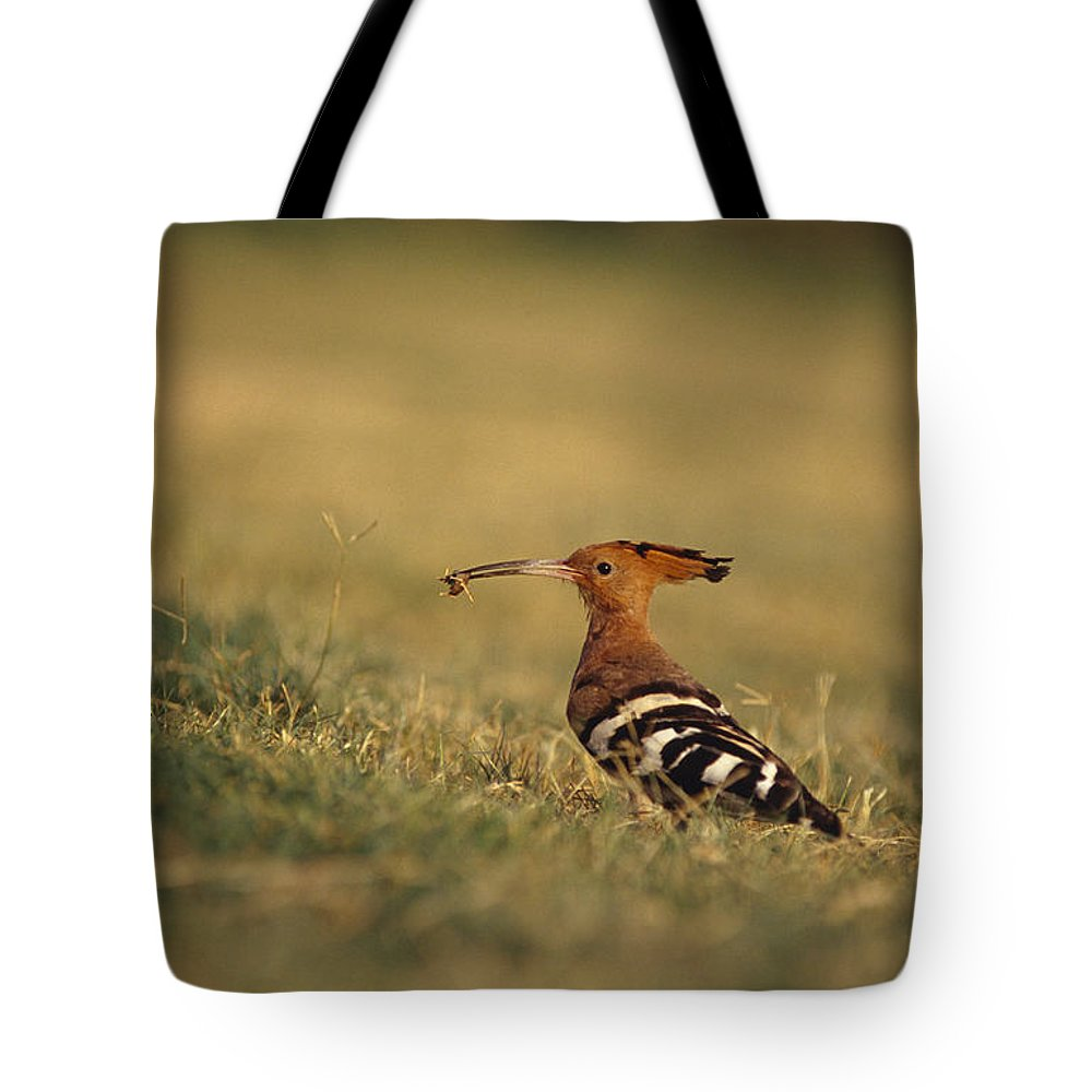 Taj Mahal Tote Bag featuring the photograph A Eurasian Hoopoe With An Insect by Jason Edwards