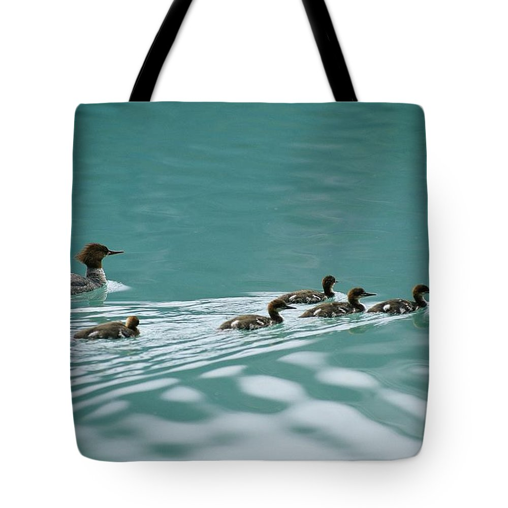 North America Tote Bag featuring the photograph A Family Of Merganser Ducks Swim by Michael Melford