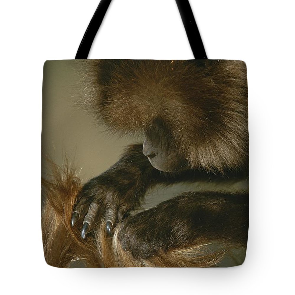Animals Tote Bag featuring the photograph A Female Gelada, Theropithecus Gelada by Michael Nichols