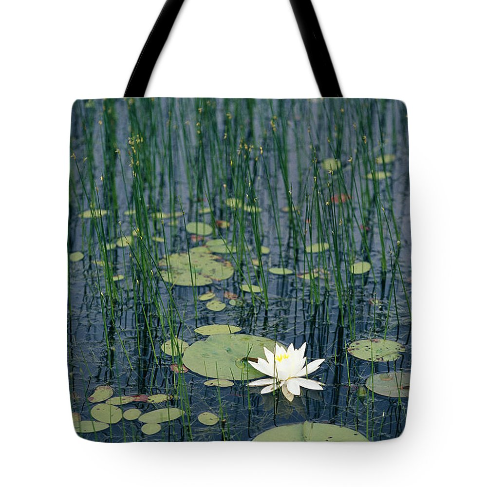 North America Tote Bag featuring the photograph A Flowering Water Lily In Black by Skip Brown